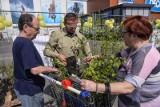 """W Trójmieście i Rumi rozdaliśmy tysiące sadzonek roślin w ramach dorocznej akcji """"Drzewko za makulaturę"""""""