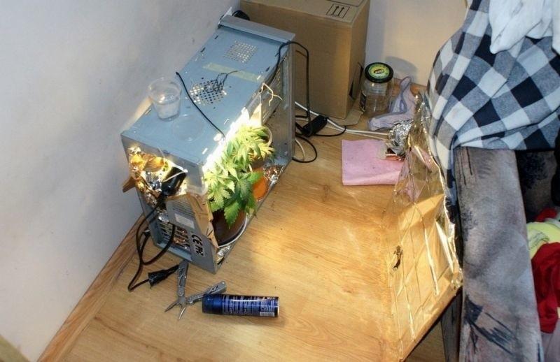 Uprawa konopi we wnętrzu komputera (zdjęcia)