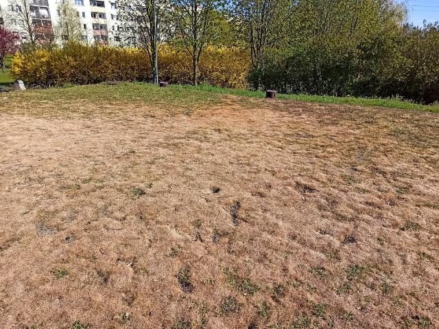 W poznańskich parkach, jak na os. Bolesława Chrobrego już widać skutki suszy. Mimo to w tygodniu już była tam koszona trawa.