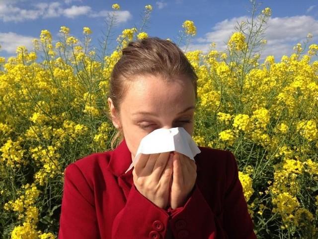 Uznawana za najładniejszą porę roku wiosna niektórym źle się kojarzy, ponieważ w tym sezonie wielu ludzi cierpi na alergię. A na wiośnie ten problem się nie kończy, ponieważ rośliny pylą nawet to sierpnia.
