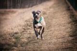 Agresywne psy już ponad rok grasują na Stabłowicach
