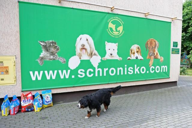 Schronisko w Poznaniu świętuje jubileusz. Przyjdź z prezentem!