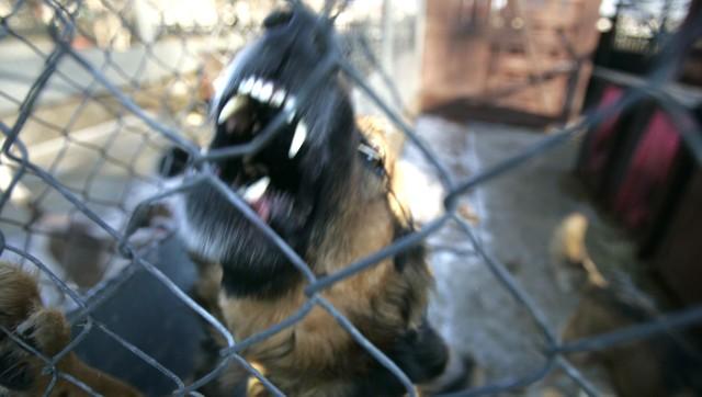 W Przedborzu pies pogryzł 5-letnie dziecko.