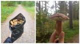 Wysyp grzybów nad morzem w Dziwnówku. Wczasowicze zachwyceni! Zobacz ich zbiory na zdjęciach