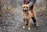 Psy ze schroniska dla zwierząt w Chorzowie szukają nowego domu ZDJĘCIA Adoptuj zwierzę ze schroniska