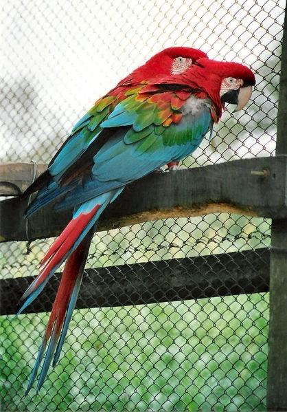 Nie można przewozić przez granicę egzotycznych ptaków – żywych i wypchanych, a także ich jaj