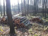 Kleszczów. Ludzie próbują powstrzymać wycinkę lasu. Napisali petycję do ministra środowiska