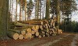 Drewno tańsze. Średnia cena sprzedaży drewna według Głównego Urzędu Statystycznego