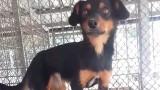 Dwa zdrowe psy uśpione w schronisku. Jak do tego doszło? Sprawie przygląda się prokuratura