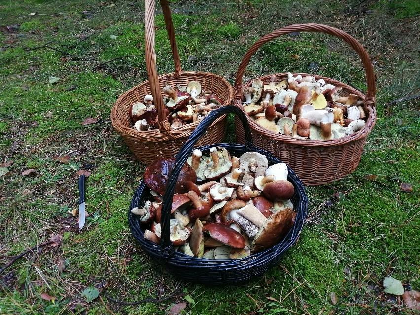 Dlaczego wiele grzybów jest robaczywych?