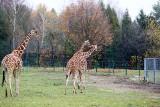 Park Śląski poleca się na majówkę 2021. Wizyta w zoo, w skansenie, spacer alejkami i przejażdżka kolejką linową Elka