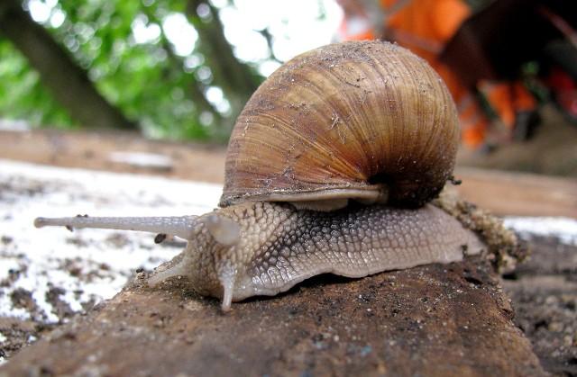 Na Wzniesieniach Łódzkich występuje aż 51 gatunków ślimaków.