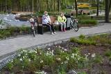 Majówka w Parku Miejskim w Stalowej Woli. Spacery, jazda na rowerze, gimnastyka [ZDJĘCIA]