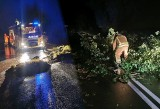 Niszczycielska siła burzy w woj. kujawsko-pomorskim. Powalone drzewa, uszkodzone budynki [zdjęcia]