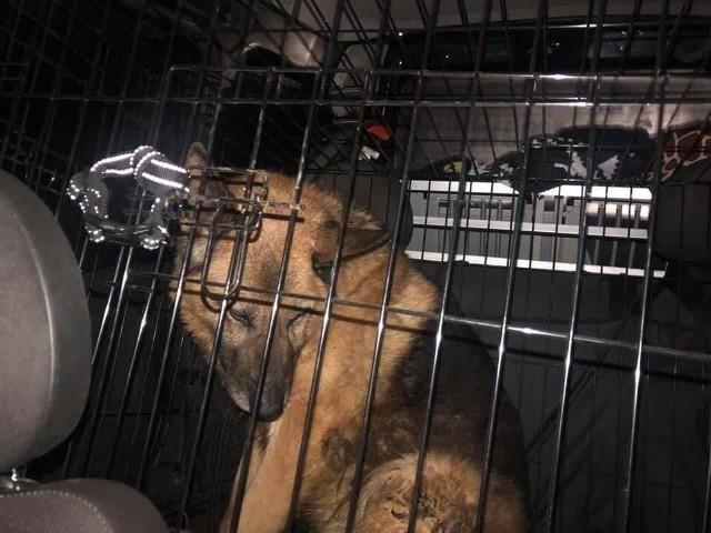 W takich warunkach przetrzymywane były psy na jednej z plebanii w gminie Grodków.