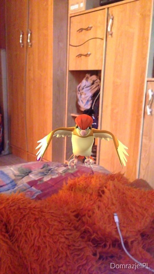 Internauci już chwalą się swoimi Pokemonami znalezionymi w grze Pokemon Go.