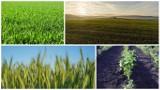 Naliczyli około 1 408 tysięcy gospodarstw w Polsce. Ich uprawy?