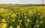 Rolnicy, którym nawałnica zniszczyła uprawy, mogą ubiegać się o pomoc