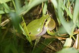 Żab, jaszczurek, ropuch w Lubuskiem mamy coraz mniej. Co możemy zrobić, aby przetrwały?