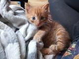 Toruń: Koci babyboom w schronisku dla zwierząt. Pilnie potrzebna jest pomoc!