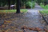 Pogoda w Lubuskiem daje się we znaki. Połamane gałęzie i konary drzew. Strażacy wyjeżdżają do interwencji