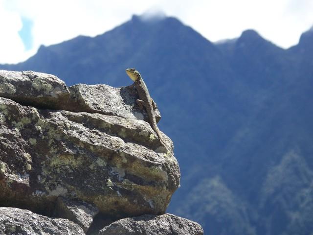 Podróż nowosolanki do Machu Picchu