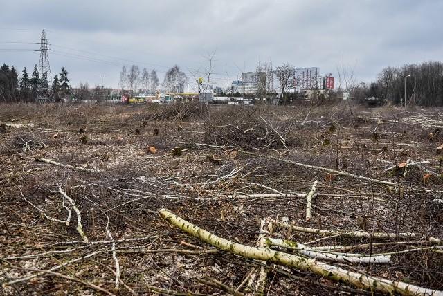 """Wielka rzeź drzew w pobliżu ronda Obornickiego. """"Zostało tylko puste pole"""" - zaalarmowali nas Czytelnicy. Przy skrzyżowaniu ruchliwych ulic Lutyckiej, Obornickiej i Witosa na wiosnę nie będzie już zielono. Właściciel prywatnego terenu w pobliżu szpitala kończy właśnie wycinkę drzew.Przejdź do kolejnego zdjęcia --->Zobacz też: Wielka wycinka na Malcie"""