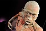 """Kraków. Umorzone śledztwo w sprawie wystawy ludzkich ciał """"The Human Body"""""""