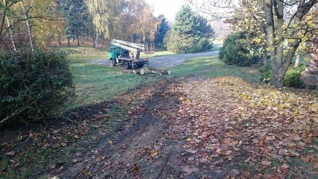 Do usunięcia na Cytadeli wytypowano 324 drzewa
