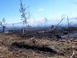 Pożar lasu w Mylofie koło Rytla [6.06.2018]. Miejsce pożaru trudno dostępne dla strażaków. W akcji gaśniczej samoloty typu dromader