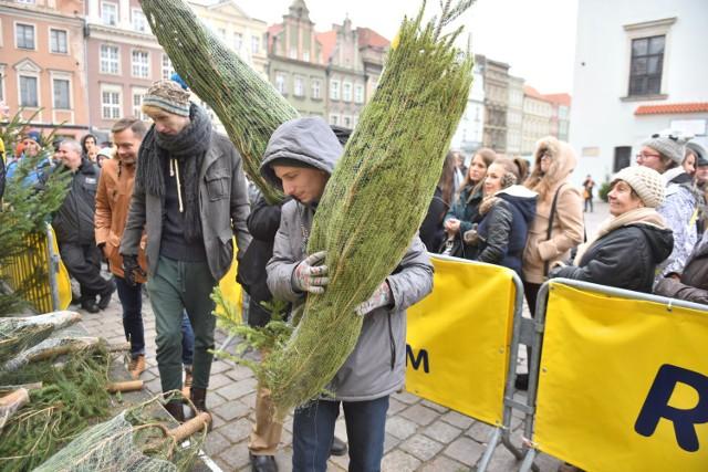 Darmowe choinki: Tak było rok temu na Starym Rynku