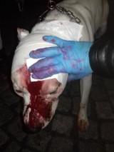 Ojciec wbił psu nóż w głowę. Czy ratował swoje dziecko?