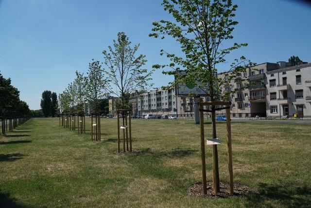 Tak wyglądają drzewka na Dolnej Wildzie, którym patronują założyciele Warty Poznań