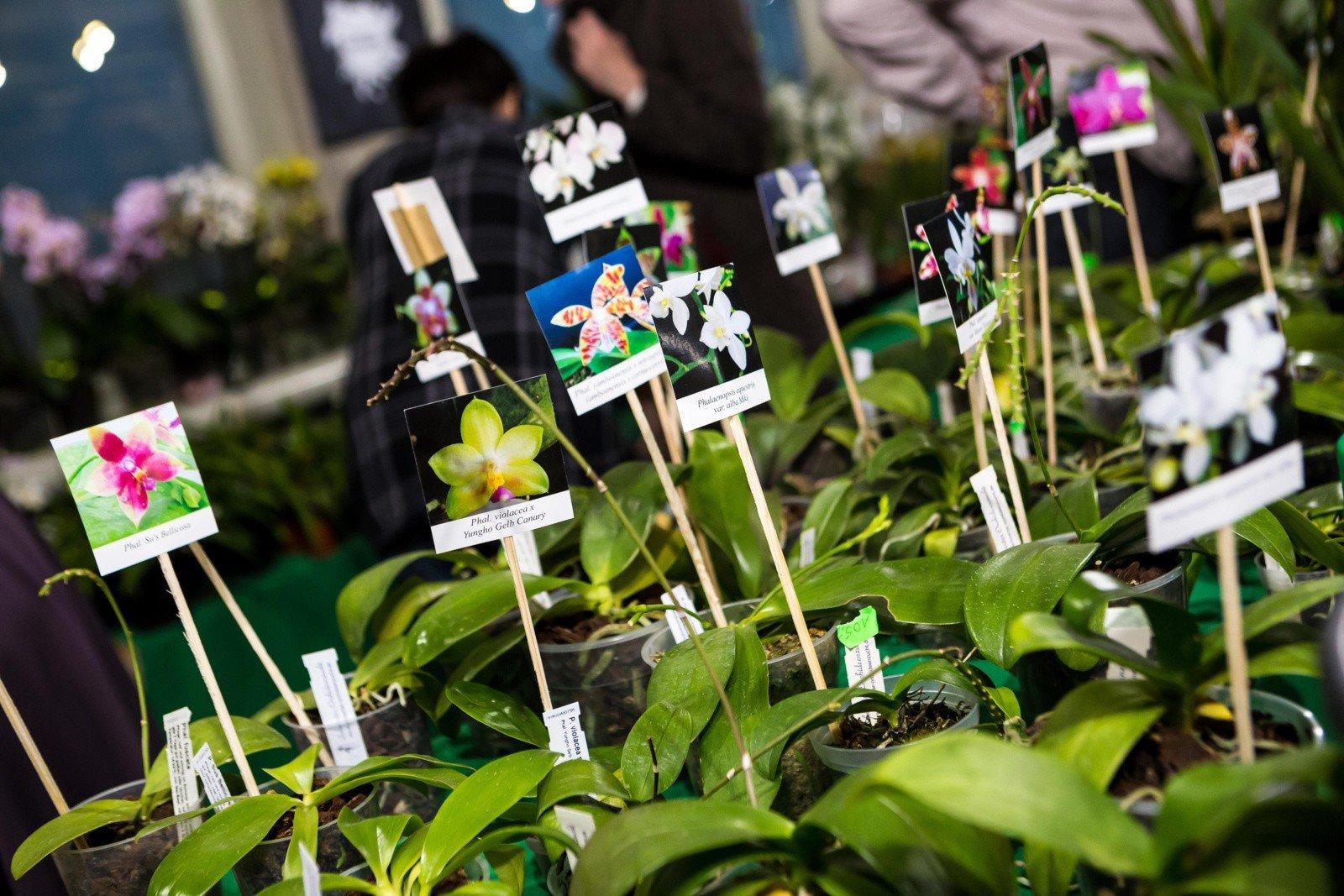 Kwiaty Ogrodowe I Balkonowe Rodzaje Ceny Biedronka Aldi