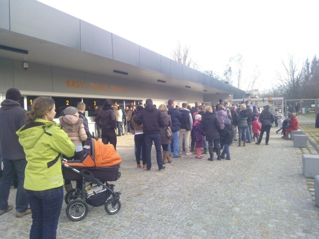 W kolejka do zoo wrocławianie stali dziś nawet 40 minut