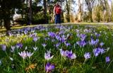 Dziś astromnomiczna wiosna! Prognoza pogody na marzec 2017 KATOWICE