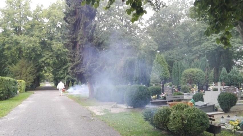 Walka z komarami była podejmowana m.in. na stargardzkich cmentarzach i w parkach.
