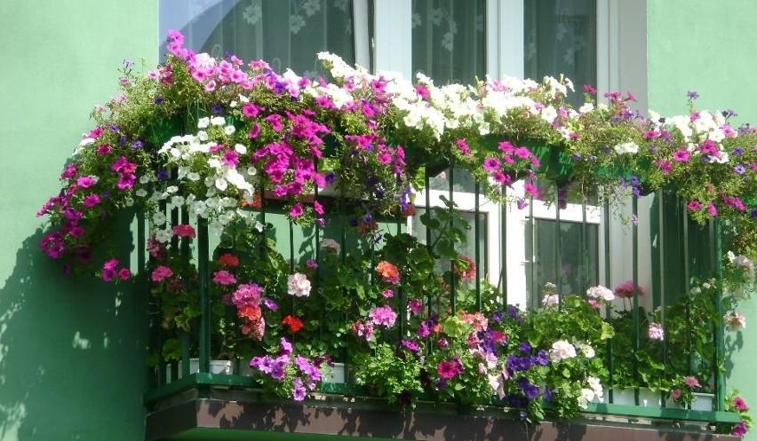Jakie Kwiaty Na Balkon Top 20 Kwiatów I Roślin