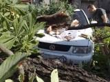 Zielona Góra, Pl. Pocztowy: Drzewo runęło na samochody
