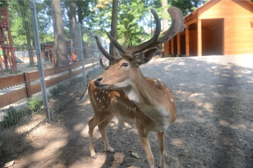 Ogród botaniczny i Mini Zoo w Zielonej Górze...