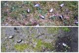 Martwe ptaki w pierwszy dzień Bożego Narodzenia. Sprawą z ulicy Bema zajęła się policja (zdjęcia)