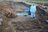 Odnaleziono masowy grób niemieckich żołnierzy w gminie Cisek w powiecie kedzierzyńsko-kozielskim