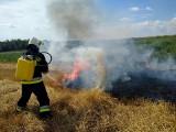 Niebezpieczny pożar traw podczas upałów. Ogień rozprzestrzeniał się błyskawicznie