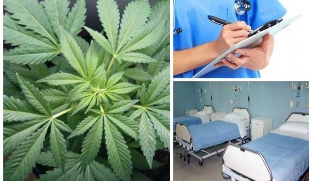 W Bydgoszczy już tej zimy po raz kolejny rozpocznie się program badań z wykorzystaniem marihuany medycznej.  Kto weźmie w nim udział?