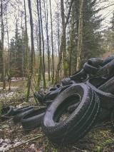 Nadleśnictwo Cewice. Ktoś porzucił w lesie tysiąc starych opon samochodowych. Szukają sprawcy [zdjęcia]