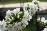 Wiosna w pełni. Przyroda na dobre wybudziła się do życia. Zobaczcie malownicze ujęcia uchwycone okiem naszego Czytelnika