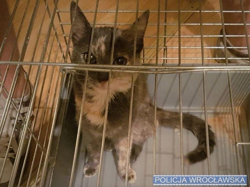 Ukradli wrocławiance kota i drapak. Kryminalni schwytali złodziei i odzyskali łup