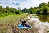 W Poznaniu jest tak sucho, że można zrobić piknik na... środku rzeki [ZDJĘCIA]