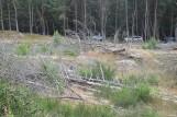 Sprawa wycinki drzew w Łebie nadal nierozstrzygnięta. Biegły nie stawił się na rozprawę