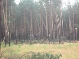 """Powiat kościerski. Mieszkańcy bez prądu, połamane drzewa. """"To był straszny widok"""""""